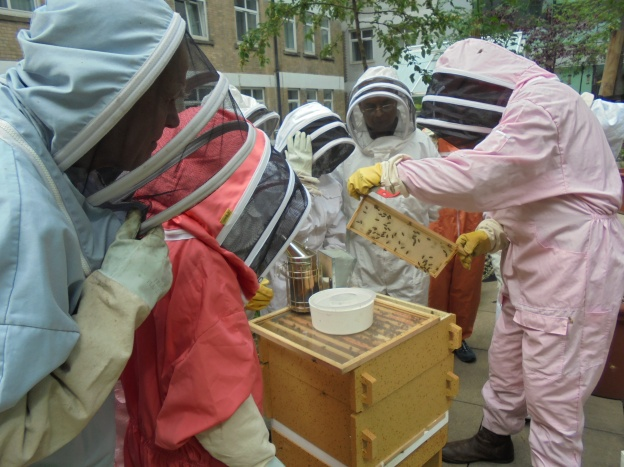 Looking at one of the hives with the beekeeper